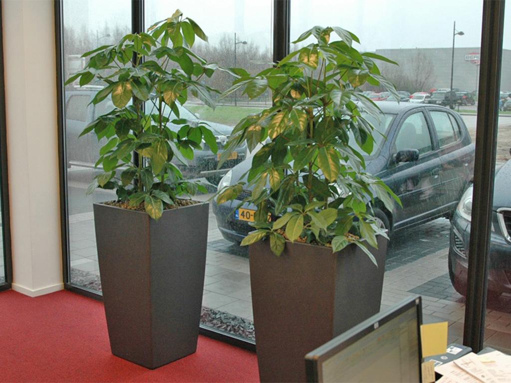 Planten Op Kantoor : Hydrocultuur planten op kantoor hengelo enschede en borne